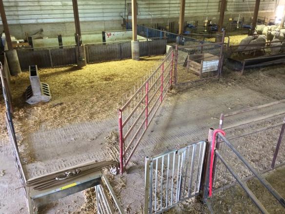 sheep-sorting-pen